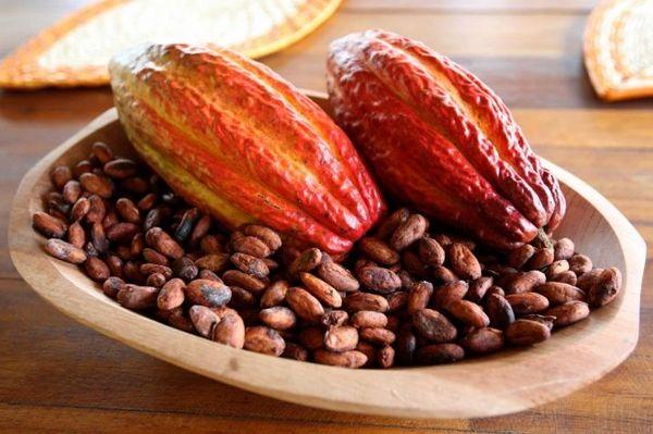 Какао алкализованный. Что это такое, чем отличается от натурального, вред, польза, рецепты, бжу