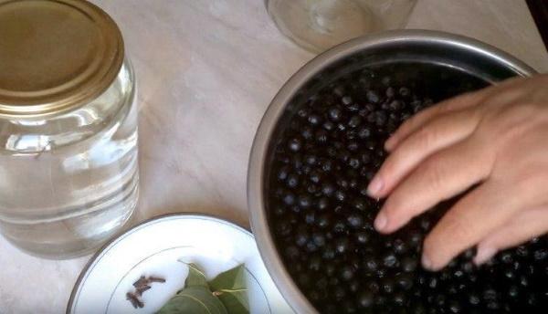 Настойка из черноплодной рябины на водке, самогоне, спирту. Рецепт простой с вишневыми листьями, яблоками, медом, гвоздикой