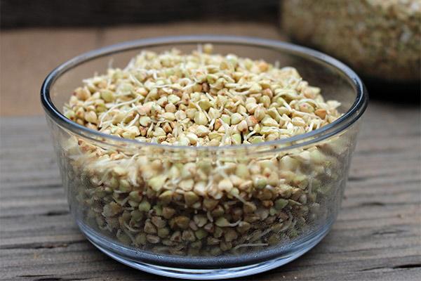 Зеленая гречка. Как варить, чем отличается от обычной, рецепты с овощами, кефиром, грибами, молоком, мясом