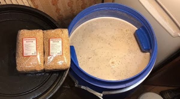 Брага на пшенице без дрожжей. Рецепт во фляге, пропорции с сахаром, проращиванием