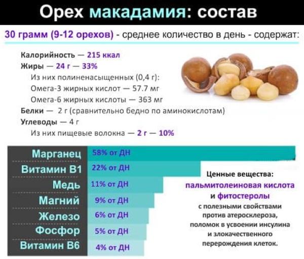Орехи в скорлупе. Виды, фото и названия, список, какие бывают