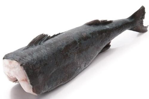 Рыба клыкач. Фото и описание, что это, польза и вред, рецепты