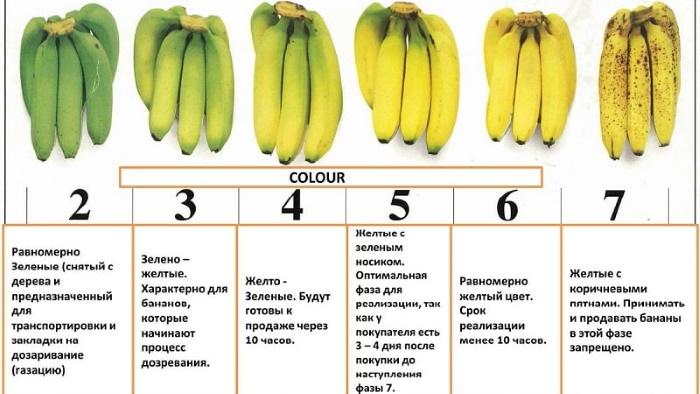 Как сохранить бананы свежими дольше в домашних условиях