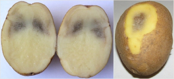 Как сохранить очищенную картошку на сутки, несколько дней